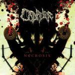 Cover of Cadaver - Necrosis